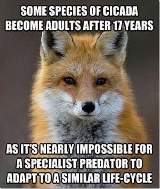 fox-facts-meme-11