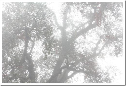 101205_trees3