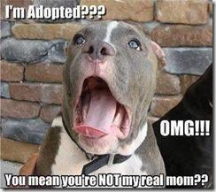 I'm -Adopted