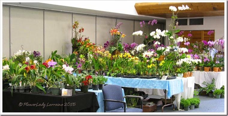 02-08-orchids2