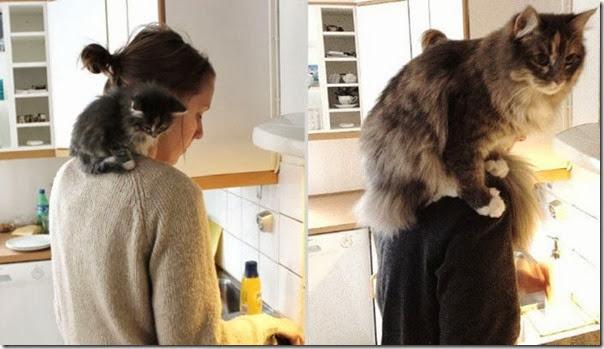Antes e Depois de Animais de Estimação (15)