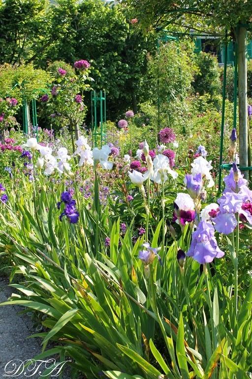 Monet's Garden 018