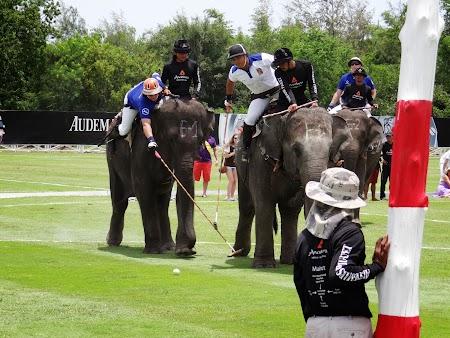 12. Polo pe elefanti.JPG