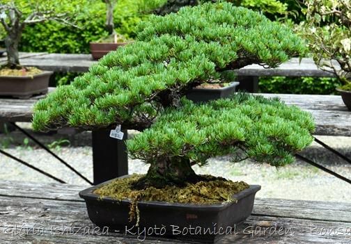 Glória Ishizaka -   Kyoto Botanical Garden 2012 - 53