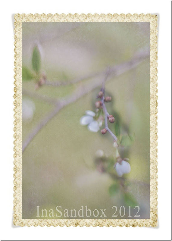Cherry blossoms with damask frame