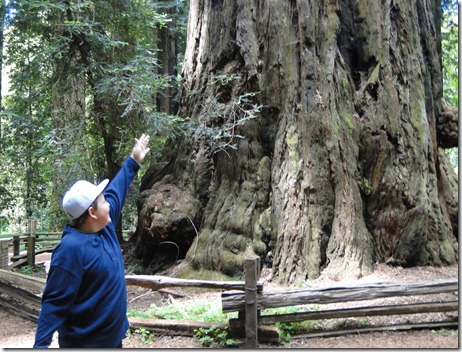 big trees 071
