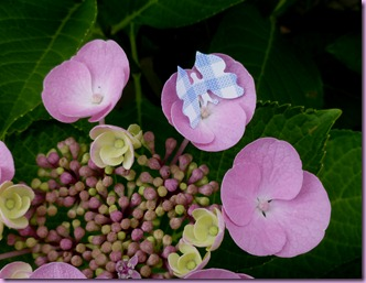 farfalle in giardino (4)
