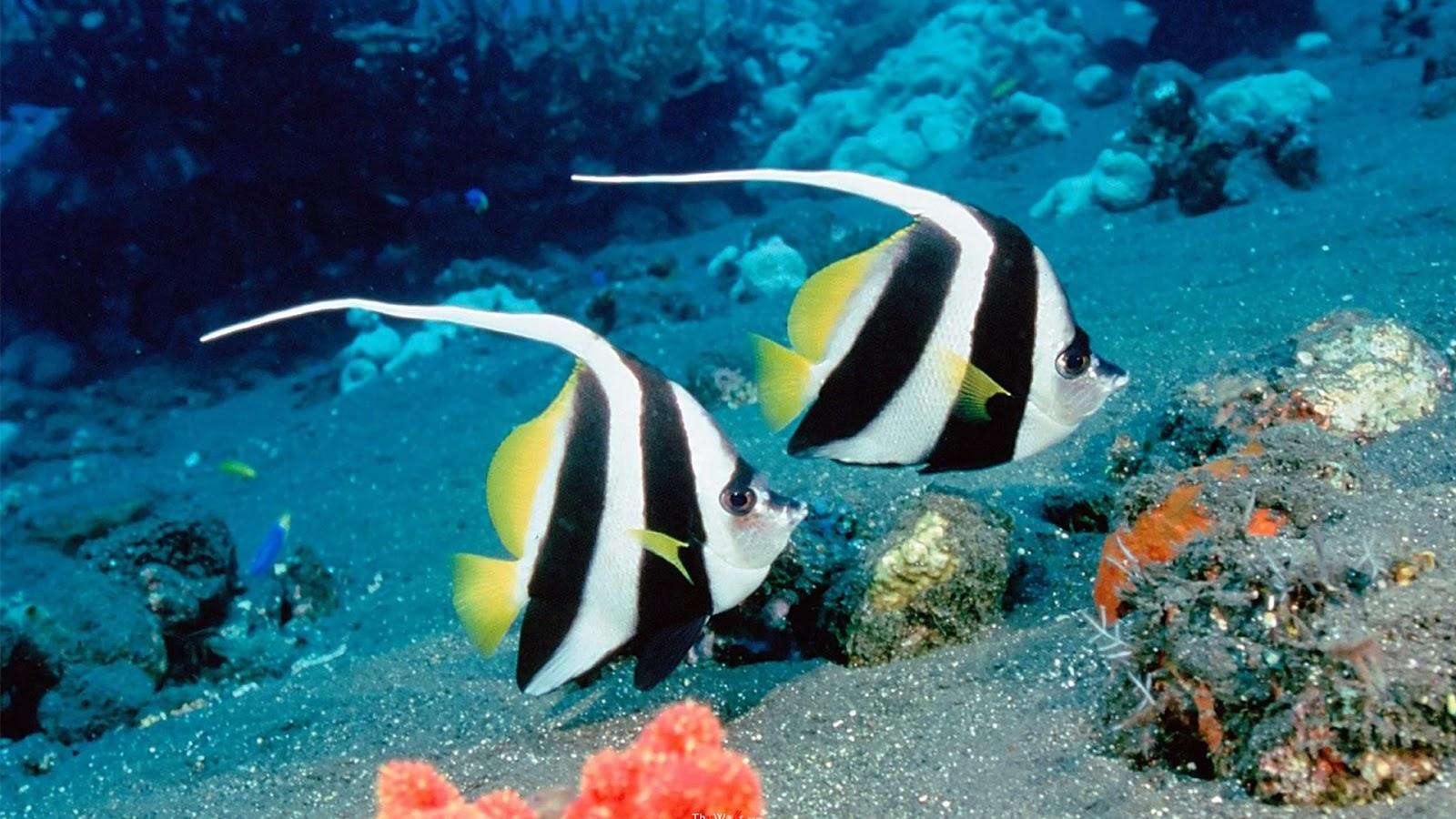 sea fish 3 - seourpicz Beautiful Sea Fish Wallpaper