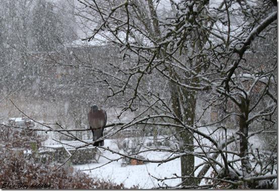 Winter2015 (54)
