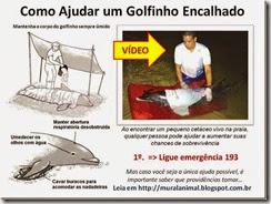 Como Ajudar um Golfinho Encalhado_thumb[1]