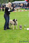 20100513-Bullmastiff-Clubmatch_30958.jpg