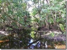 Creek next to trail