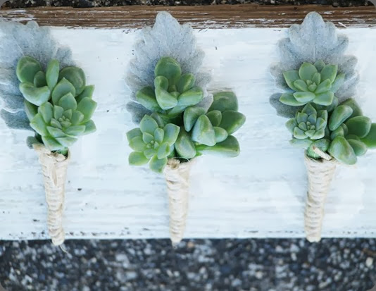 succulents 484757_10151426697386712_1357514530_n  Sass Studios photography and nine blooms au