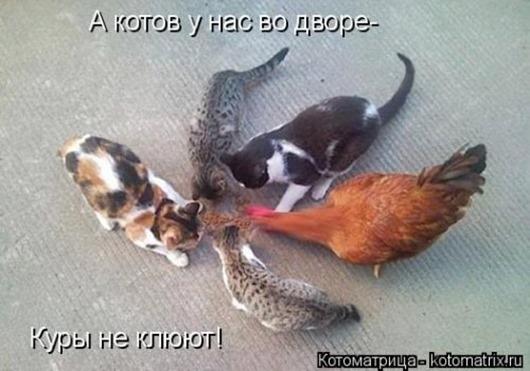 1410530261_kotomatricy-33