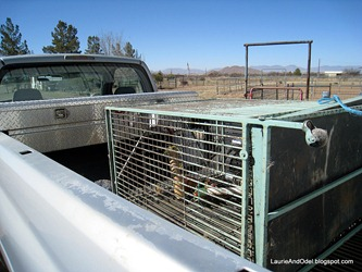 Old cage loaded for Gene