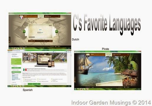 Mango Languages-001