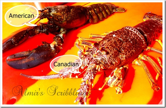 American and Canadian lobster