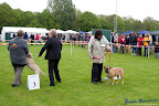 20100513-Bullmastiff-Clubmatch_30865.jpg