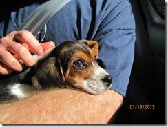 jan 2013 & puppy Scout 032