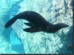 Fresno Zoo 017