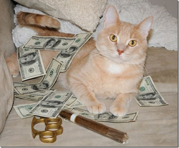 rich-wealthy-cats-16