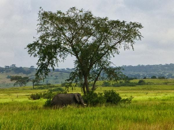 CTC Green Uganda