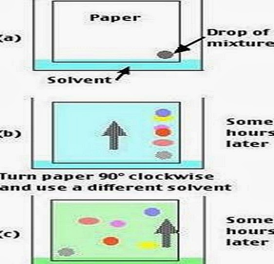 paper-chromatography-two-dimentional-