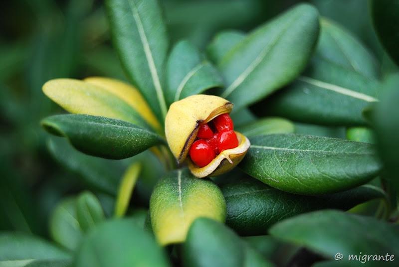 minúsculo fruto - barcelona
