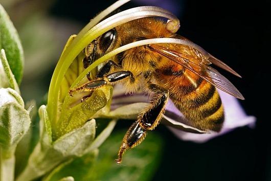 bee-big-4