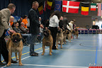 20130510-Bullmastiff-Worldcup-0275.jpg
