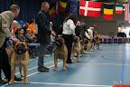 20130510-Bullmastiff-Worldcup-0275.jpg