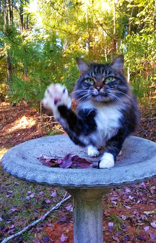 cat waving