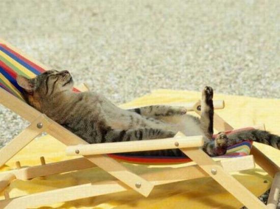gatos durmiendo (8)