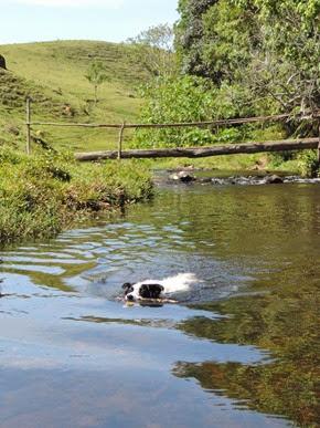 Dogs Trekking 6 (228)