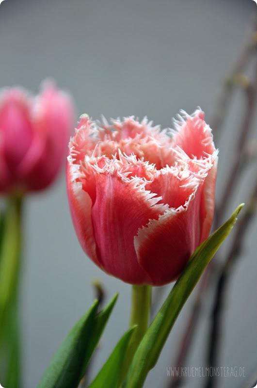 FF (06) gelbe Protea, gefüllte Tulpen, Kirschzweige und rosa Gänseblümchen