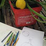 vegie_artworks_10 - 056.jpg