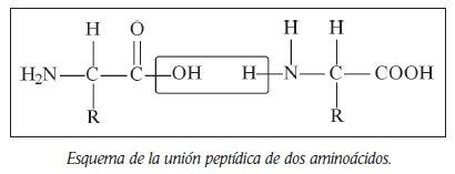 union peptidica aminoacidos