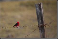 LL - bird on a wire