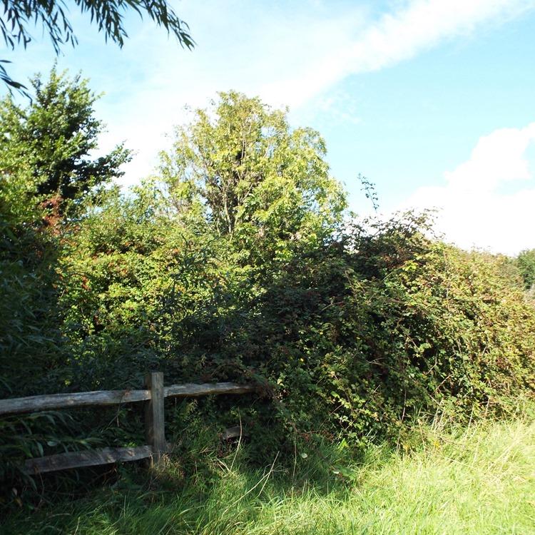 wooden fence on an evening walk