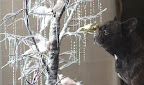 Sharkey, this is a real tree branch covered with glitter and decorated with shiny icicles and feathered birds.