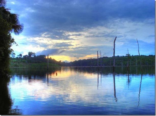 beautiful-amazon-rain-forest-23