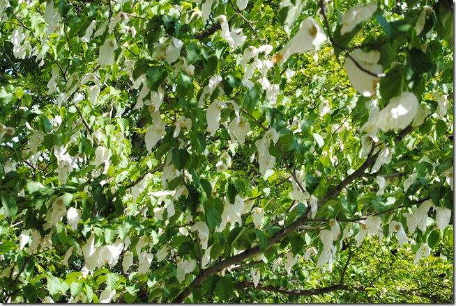 Botanisk have 2011 027