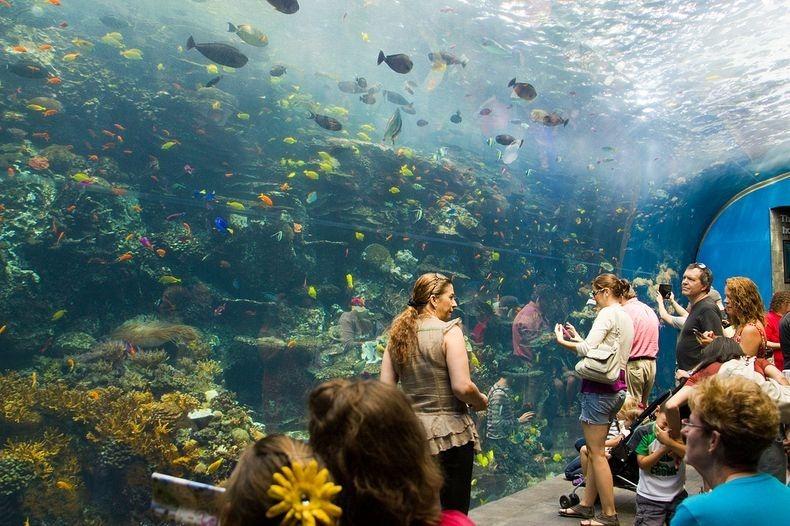 Georgia Aquarium The Largest Aquarium In The World
