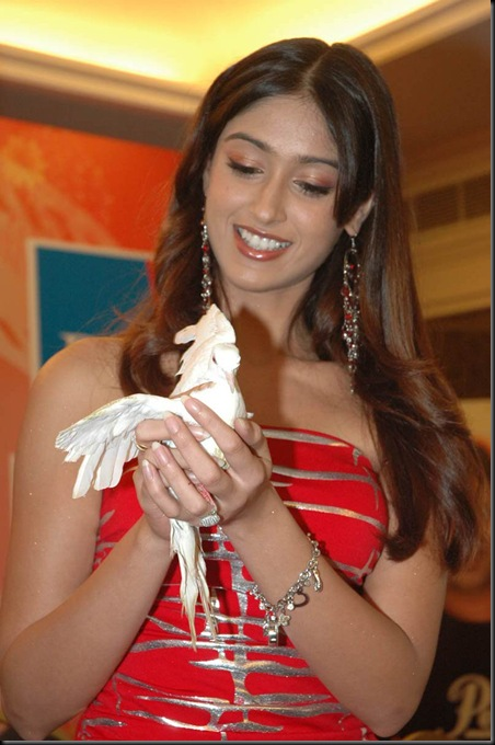 ileana hot tollywood actress pictures