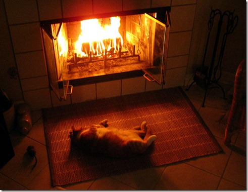 cat_in_front_of_a_fireplace