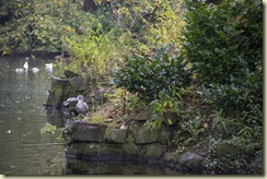 10.St. Stephen's Green - Dubln