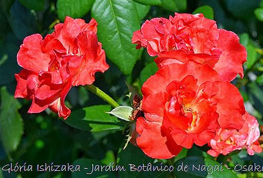 42 - Glória Ishizaka - Jardim Botânico Nagai - Osaka