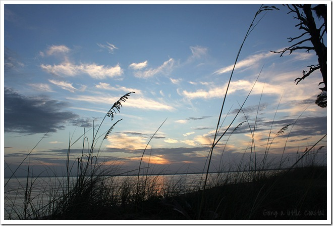 sea oats 2_edited-1