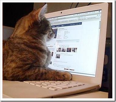 facebook_cat