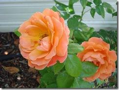 july flowers 201113